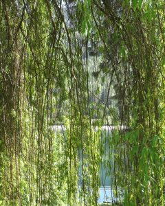 little bit of willow